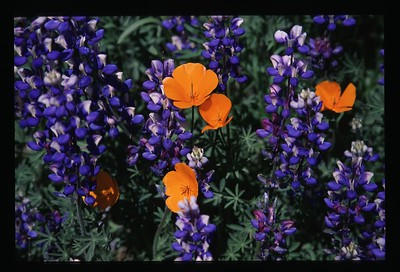 Flowers & vegetable garden